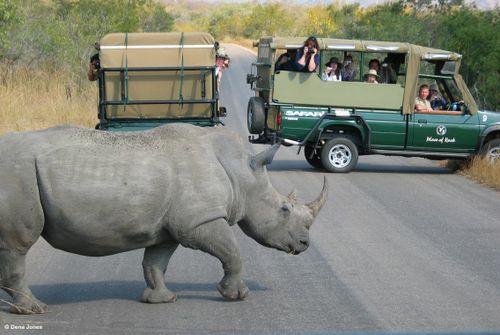 South Africa Safari Rhino