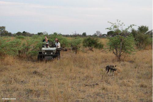 Botswana Dogs 1