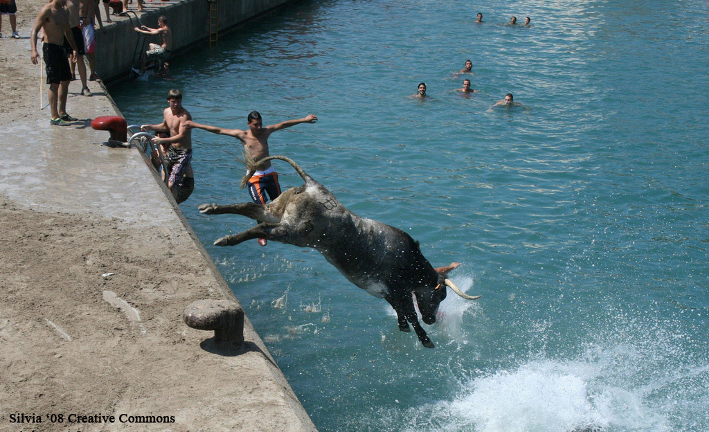 A Bull Falls into the Sea