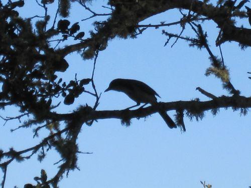 Bird in Sillouette
