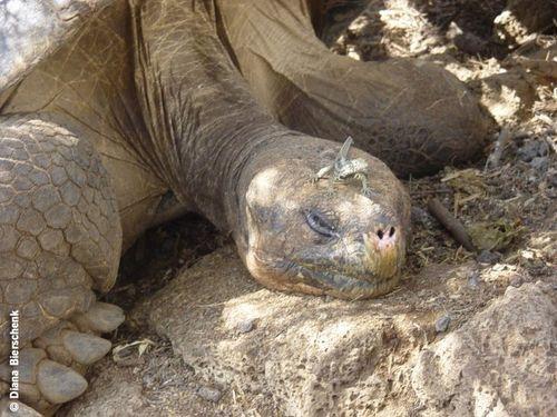 Tortoise with lizard on head