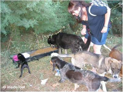 Feeding stations for stray dogs