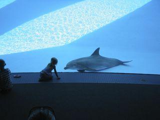 Captive dolphin c  Zak Brown