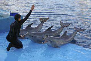 Dolphin Performance c. Hannu Liivaar